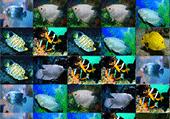Mahjong poissons exotiques